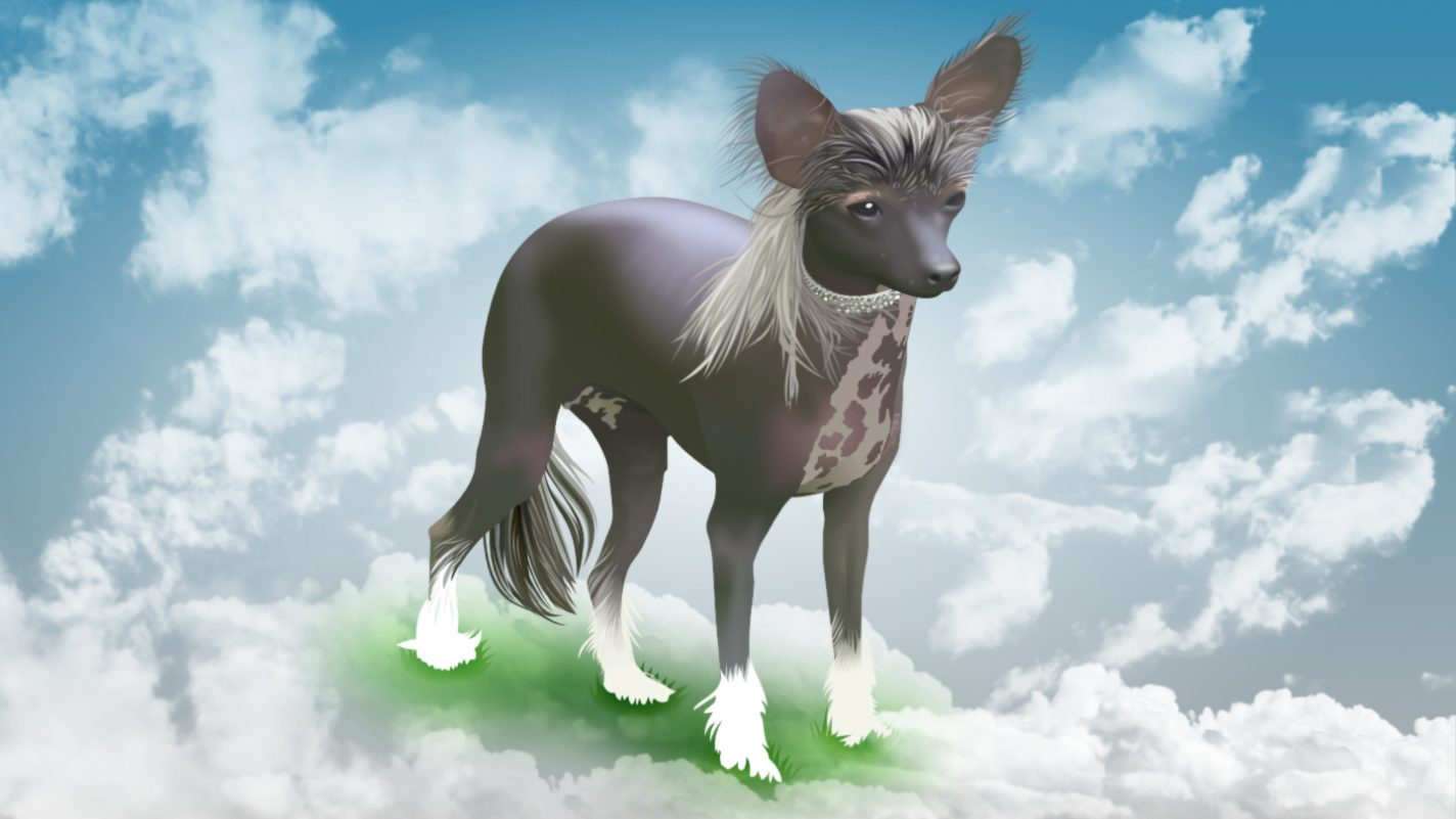 A Chinese Crested called Wizz